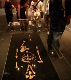 Un ancêtre de Lucy découvert en Ethiopie : il était probablement bipède | Aux origines | Scoop.it