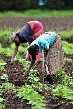 RDC : 620 millions d'euros de l'UE pour santé, agriculture ...   Questions de développement ...   Scoop.it