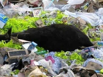Plastic Bags a Bigger Threat to India's Future Than Nuclear Weapons: Supreme Court Justices | Vertical Farm - Food Factory | Scoop.it