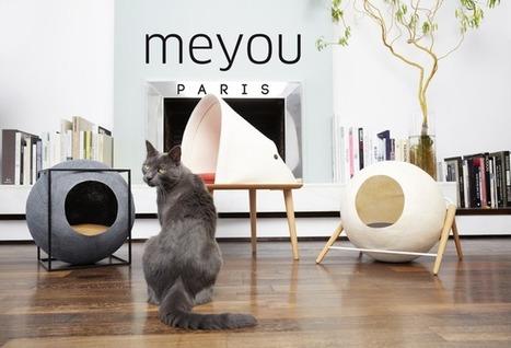 Meyou, ou quand les chats investissent le mobilier des humains — | Les chats c'est pas que des connards | Scoop.it
