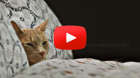 Cute Ikea commercial featuring a few cats! | Pet Humor | Scoop.it