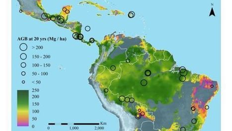 Mas carbono en bosques secundarios - Bioenergycrops.com   Bioenergy Crops   Scoop.it