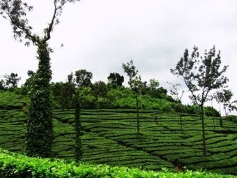 Top 10 Honeymoon Destinations in Kerala | Articos | Scoop.it