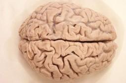 Brain Growth in Autism | Brain Blogger | School Psychology in the 21st Century | Scoop.it