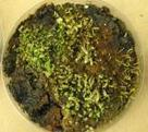 Mosses frozen in time come back to life | Life | Science News | Erba Volant - Applied Plant Science | Scoop.it