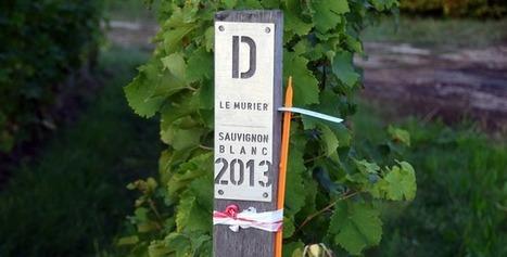 Petit Cheval Blanc, le blanc du Château Cheval Blanc | Le vin quotidien | Scoop.it