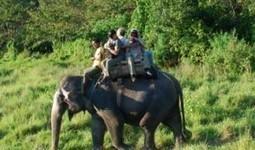 Chitwan safari | Organic Farming | Scoop.it