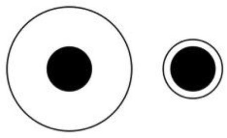 Monkeys and humans see optical illusions in similar way   animals and prosocial capacities   Scoop.it
