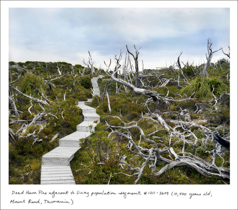 Gallery: The oldest living things in the world | ideas.ted.com | Biodiversity protection | Scoop.it