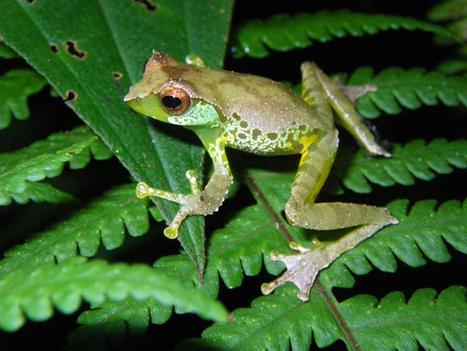 WWF : 126 espèces animales découvertes en Asie du Sud-Est - Asie-info | Sciences Insolites | Scoop.it