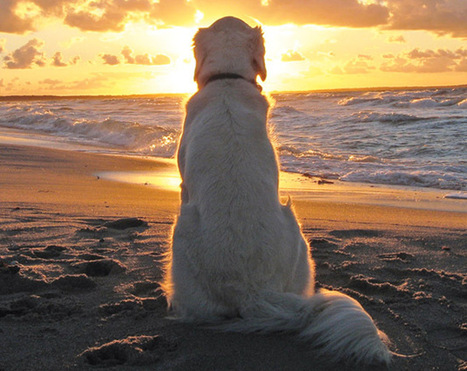 Into the Sunset | The Animal-Human Bond | Scoop.it