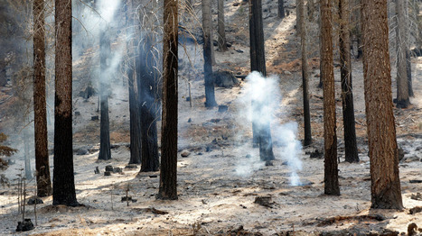Fuel In The Fire: Burn Wood For Power Or Leave It To Nature | Sustain Our Earth | Scoop.it