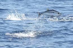 98% des eaux marines du large ne sont pas protégées par le principal réseau de conservation eur | Biodiversité | Scoop.it