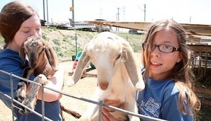 Urban Farmers Fight To Keep Livestock In Long Beach | Neon Tommy | Vertical Farm - Food Factory | Scoop.it