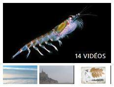 Biodiversité et adaptation climatique (COP21) | EntomoScience | Scoop.it