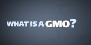 Video: What is a GMO? - Organic Connections   Searching for Safe Foods   Scoop.it