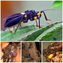 Katwekera - The Noize Maker: 10 Most Terrifying and Dangerous Insects | katwekera ^ namba 8 baibe | Scoop.it