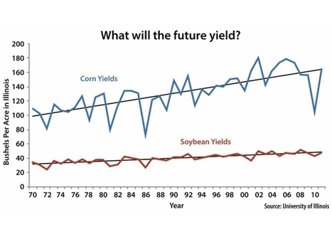 Soybean production needs to increase | Education & Agriculture | Scoop.it