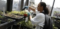 Chicago Students Create Urban Farming Project in... | Vertical Farm - Food Factory | Scoop.it