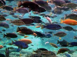 fauna marina | ecosistemas | Scoop.it