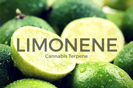 Limonene: Anti-Cancer Terpene | Whaxy | Notebook | Scoop.it