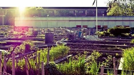12 passos para começar uma horta comunitária | Cultura colaborativa | Scoop.it