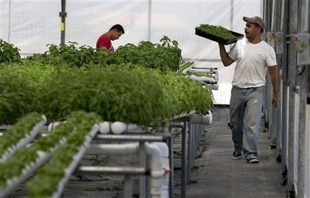 LAS VEGAS: Dry Nevada seeing green in indoor farming | Sun News (Myrtle Beach, SC) | CALS in the News | Scoop.it