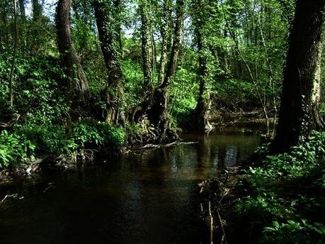 Précieuses forêts riveraines : Les habitants des ripisylves | Zones humides - Ramsar - Océans | Scoop.it