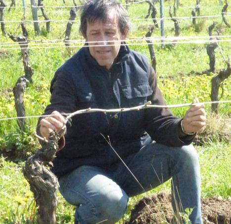 Les trois vignerons de l'IGP Coteaux de l'Ain | Le Vin et + encore | Scoop.it