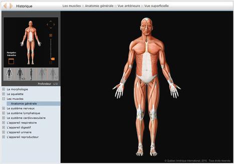 Anatomie du corps humain en 3 applications | Ressources informatique et classe | Scoop.it