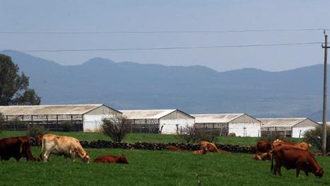 El carbón y la ganadería, los negocios más antiecológicos: ONU - El Financiero | Contaminación de empresas españolas | Scoop.it