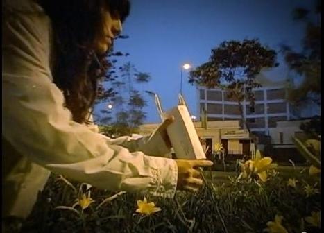 Une armée d'insectes pour nettoyer la ville | EntomoNews | Scoop.it