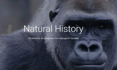 Google se asocia con museos de historia natural para mostrar nueva exposición en Internet | ARTE, ARTISTAS E INNOVACIÓN TECNOLÓGICA | Scoop.it