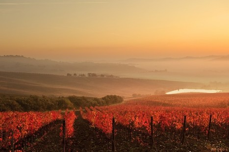 Wines of Le Marche: Rosso Conero | Wines and People | Scoop.it