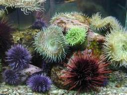 Sea Urchins- Some Sea Urchins Have Venomous Spines | All about water, the oceans, environmental issues | Scoop.it