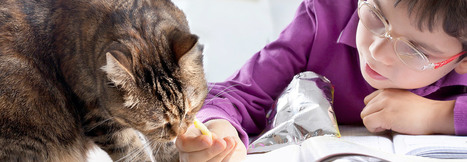 Comparing tests for diagnosis of pancreatitis in cats | Caring for Cats | Scoop.it