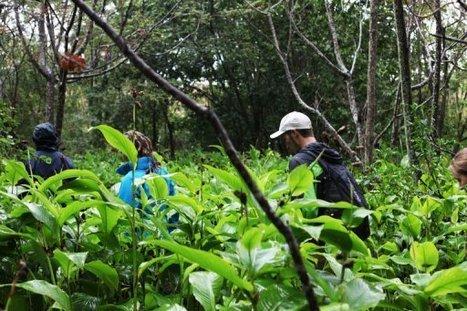 Madagascar: Anja, la communauté qui a sauvé sa forêt grâce au tourisme | Actions Panafricaines | Scoop.it