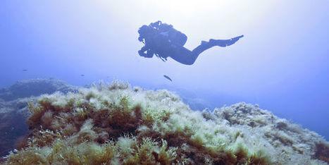 La Méditerranée est proche du «burn-out» | Biodiversité & Relations Homme - Nature - Environnement : Un Scoop.it du Muséum de Toulouse | Scoop.it
