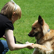 Dogs Remember as Well as Humans : DNews | Animal Lover! | Scoop.it