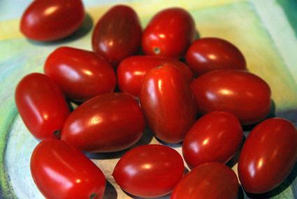 De Avanzada: Tomate transgénico con mayor resistencia a plagas | pros y contras de la mejora a nuestra salud | Scoop.it
