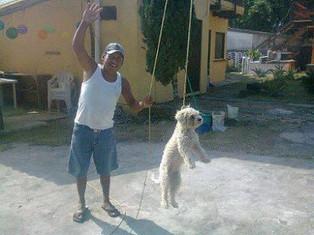 Mexican authorities are searching for man who hanged dog | Nature Animals humankind | Scoop.it