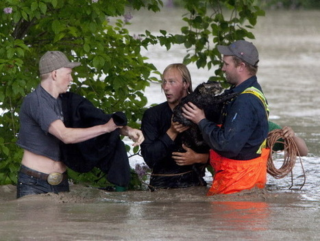White Wolf: Momo the cat becomes a celebrity after Alberta floods | Celebrities | Scoop.it