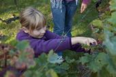 Ville de Meudon-Fête des vignes | Le vin quotidien | Scoop.it