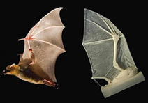 3D-Printed Bat Wing May Guide the Future of Aircraft Design | Alternativas: impresión 3D, hardware libre drones y otras tecnologías. | Scoop.it
