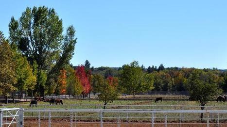 University of Arizona wins $3 million ranch property for vet school | Phoenix Business Journal | CALS in the News | Scoop.it