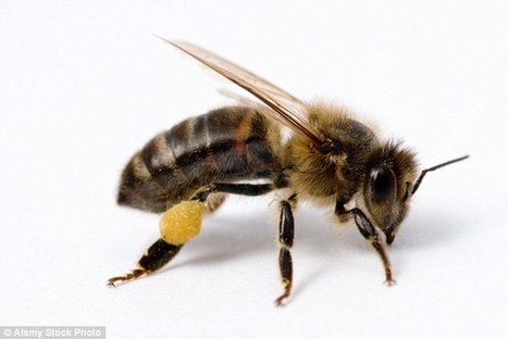 Killer hornets on the way: Asian insects set to reach Britain   @FoodMeditations Time   Scoop.it