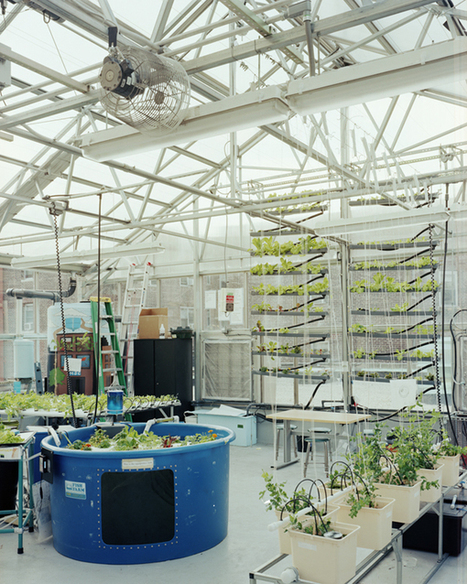 agritecture: NYSUNWORKS brings hydroponic,... | Wellington Aquaponics | Scoop.it
