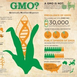 GMO? Genetically Modified Organism | Visual.ly | Ciencia, política y Derecho | Scoop.it