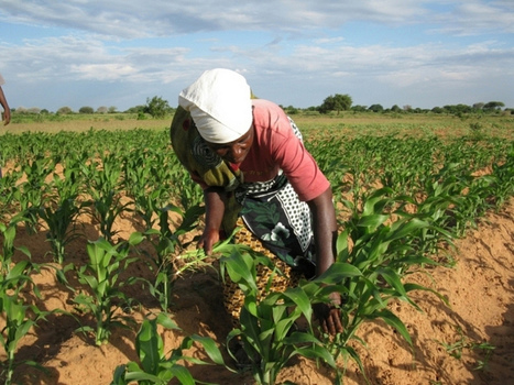 East Africa's rapid population growth to worsen food insecurity - The Independent | CGIAR Climate in the News | Scoop.it