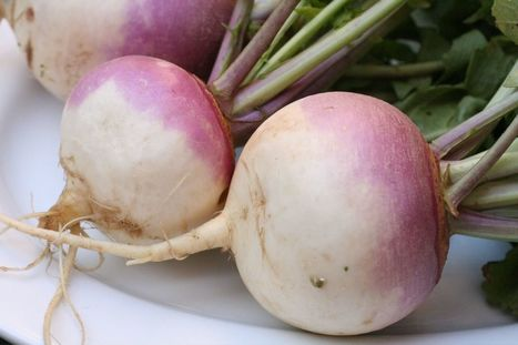 Food Ways - What Do You Make with 20 Pounds of Turnips? | 24 Carrot Diet | My I Like Eating Channel | Scoop.it